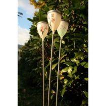 Spring Tulipa